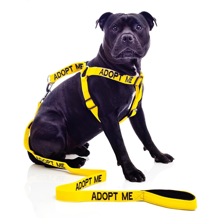 Adopt Me Strap Harness and Leash Set