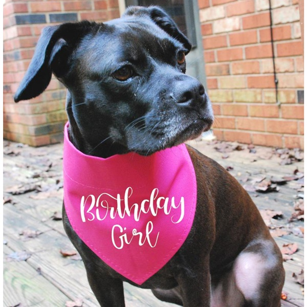 Birthday Girl Pink with White Canvas Dog Bandana