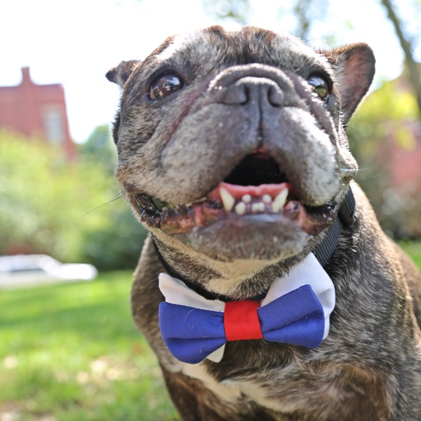 Blue, Red and White Bow Tie