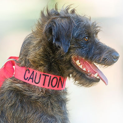 Caution Collar