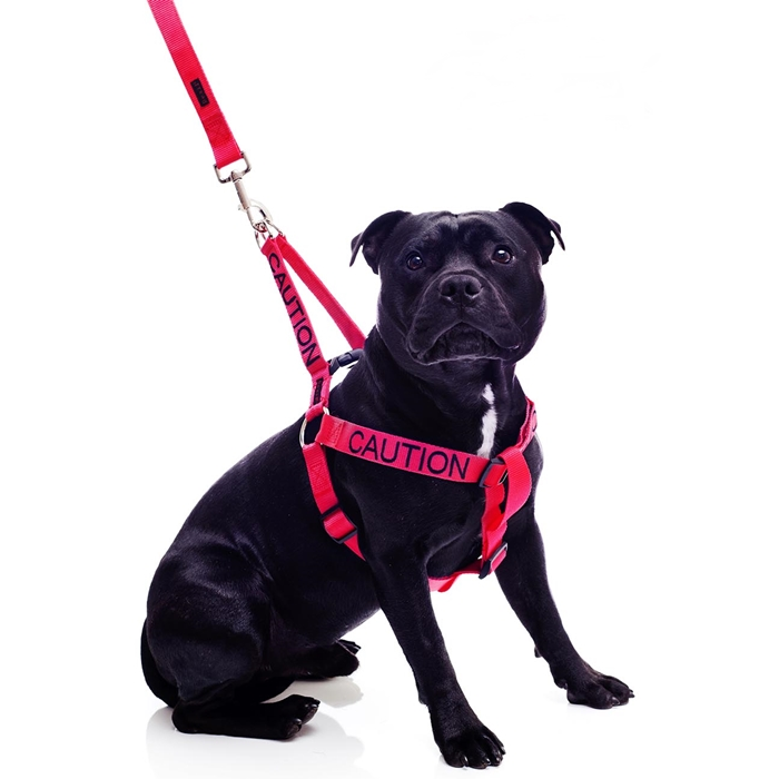 Caution Strap Harness and Leash Set