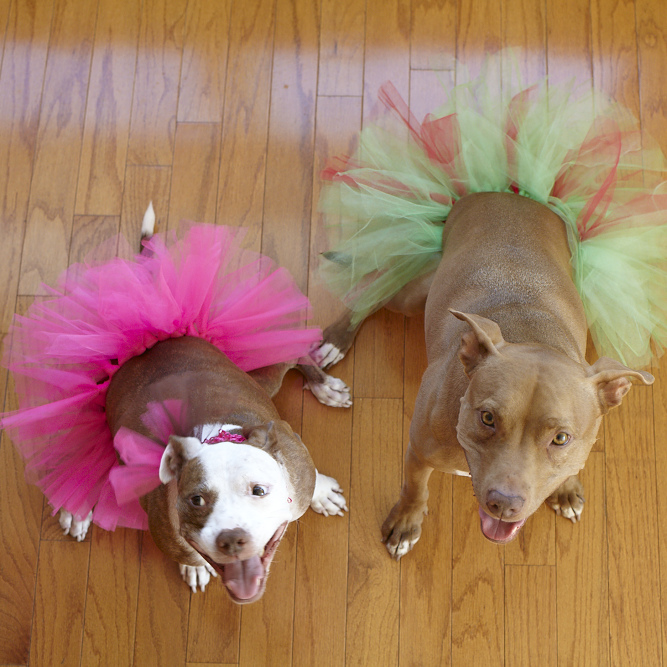 Dog Tutu (Various Colors)