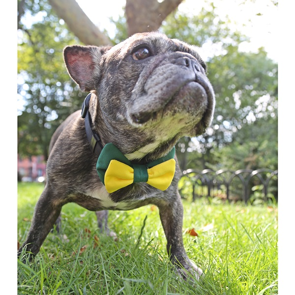 Green and Yellow Bow Tie