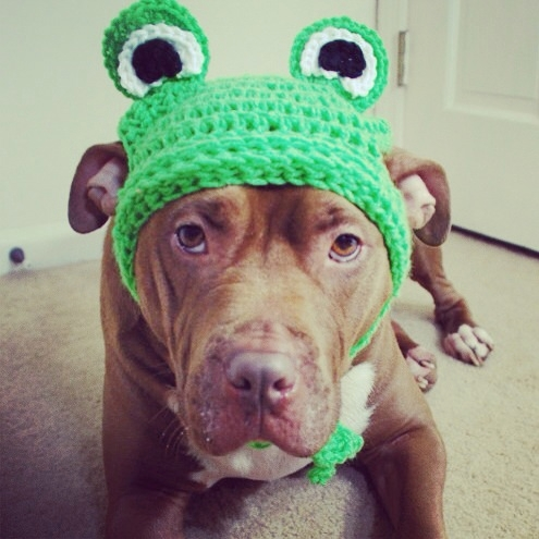 Green Frog Crochet Hat