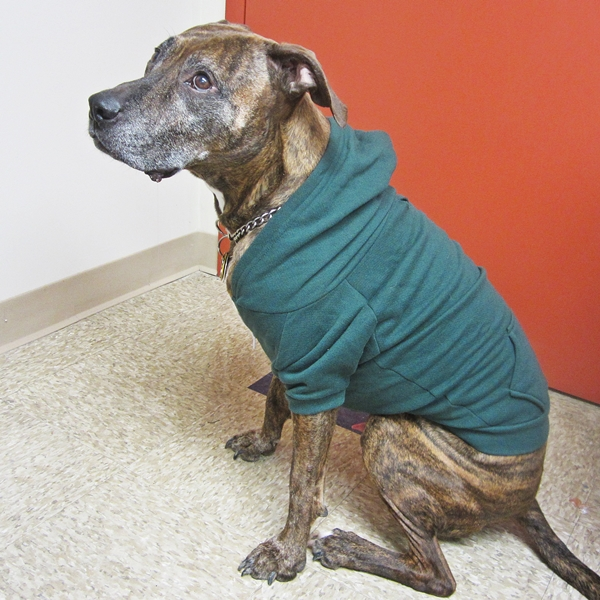 XL Green Fleece Doggie Hoodie