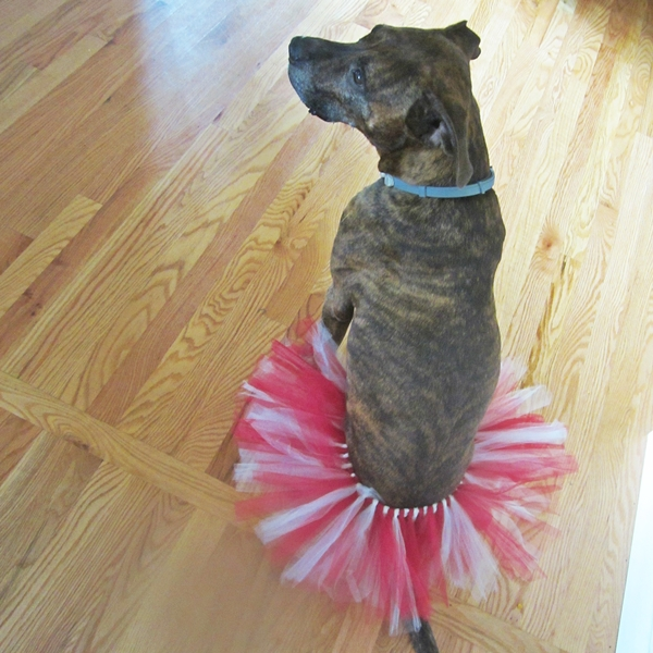 Maroon and Cream Tutu