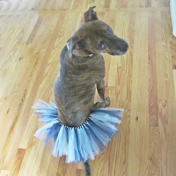 Navy and Grey Tutu