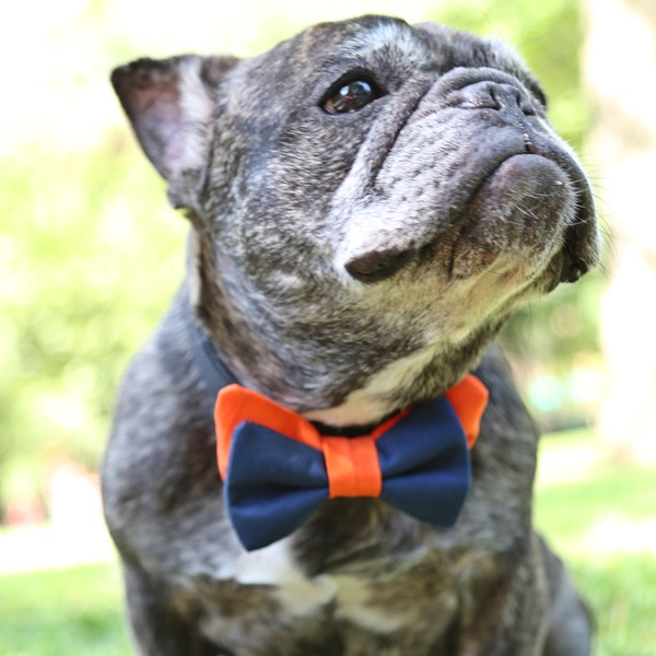 Burnt Orange and Navy Bow Tie