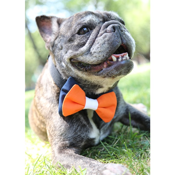 Navy, Orange and White Bow Tie