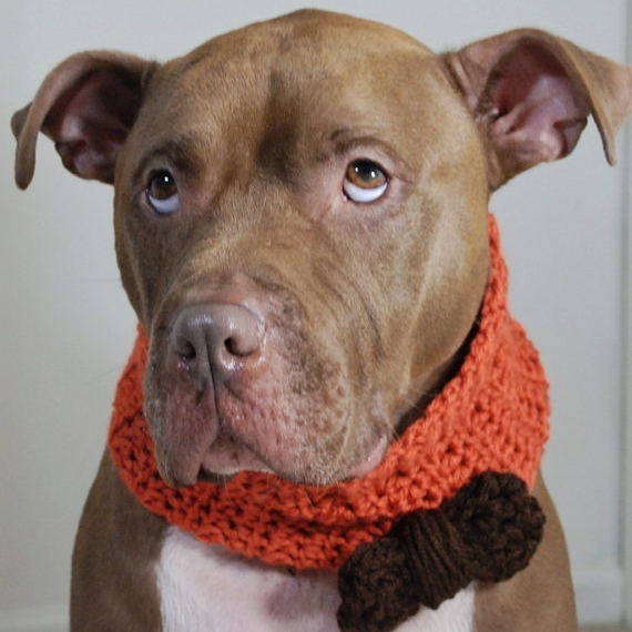 Orange with Dark Brown Bow Knit Cowl