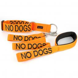 No Dogs Collar and Leash Set