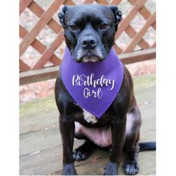 Birthday Girl Purple with White Canvas Dog Bandana