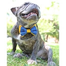 Blue and Gold Bow Tie