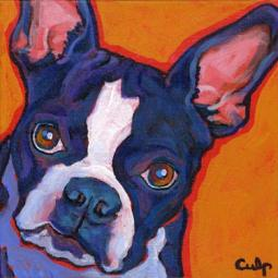 Boston Terrier Close up Print