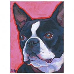 Boston Terrier Pink Background Print