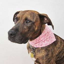 Breast Cancer Awareness Handmade Dog Bandana