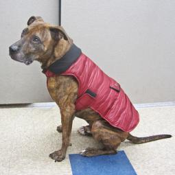 Large Cranberry Quilted Portland Dog Parka