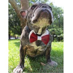 Crimson and White Bow Tie