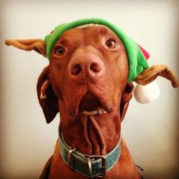 Holiday Elf Hat for Dogs