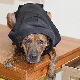 Large Black Fleece Doggie Hoodie