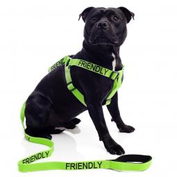 Friendly Strap Harness and Leash Set