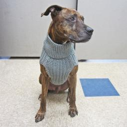 L, XL Gray Corbin's Cable Dog Sweater