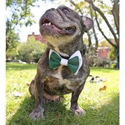 Green and White Bow Tie