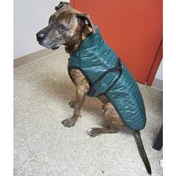 XL Green Brunswick Puffer Dog Coat
