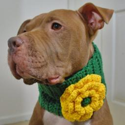 Green with Yellow Flower Crochet Cowl