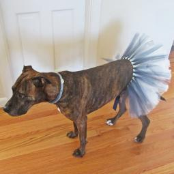 Blue and White Hanukkah Tutu