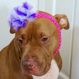Hot Pink Headband with Purple and White Flower