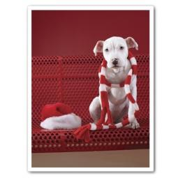 Itty Pittie Scarf on Neck Christmas Cards