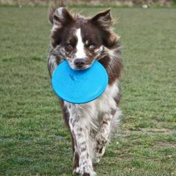 Jolly Pets Jolly Flyer Frisbee for Dogs