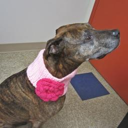 Pink with Hot Pink Flower Crochet Cowl - Large