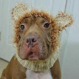 Lion Crochet Snood