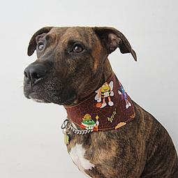 Halloween Dog Bandana with M&M Fabric