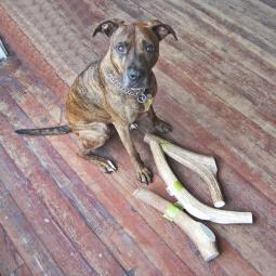 Monster Two Pound Elk Antler Chew
