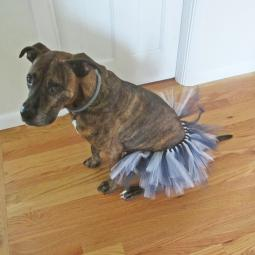 Navy and White Tutu