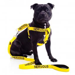 Nervous Strap Harness and Leash Set