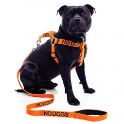 No Dogs Strap Harness and Leash Set