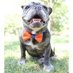 Orange and Blue Bow Tie