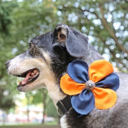 Orange and Navy Flower