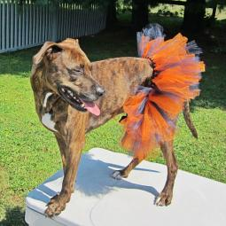 Orange and Navy Tutu