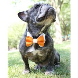 Orange and White Bow Tie
