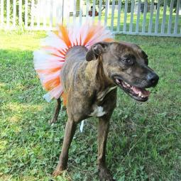 Orange and White Tutu