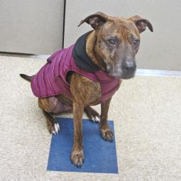 Large Plum Quilted Portland Dog Parka