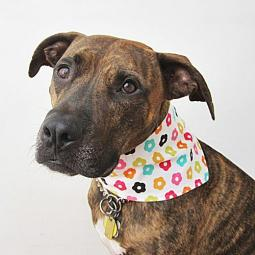 Colorful Flower Handmade Dog Bandana