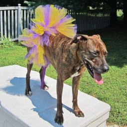 Purple and Gold Tutu