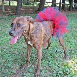 Red and Blue Tutu