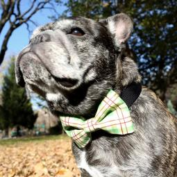 Red & Green Plaid Bow Tie